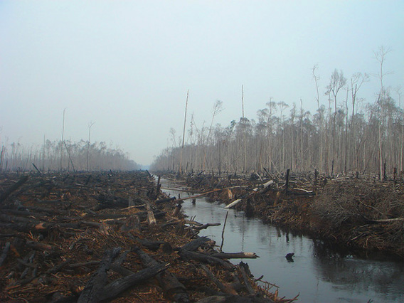 Deforestation in Sumatra.