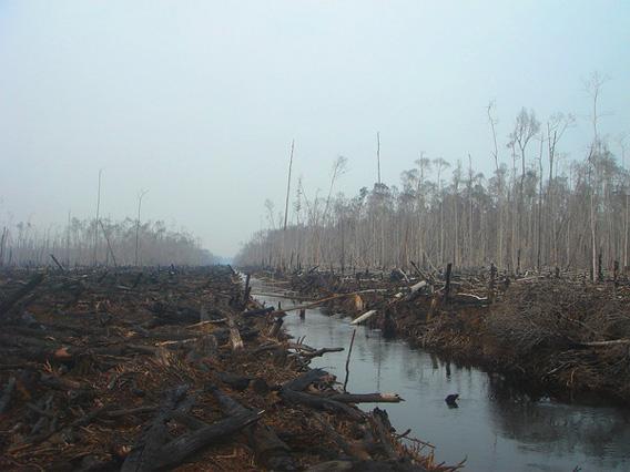 Deforestation in Sumatra.