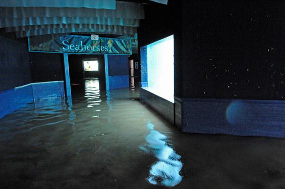 Photos Of Flooded New York Aquarium Released