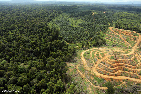 Conversion of lowland rainforest in Borneo for palm oil production.