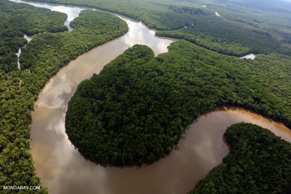 Borneo River Snake River in Malaysian Borneo