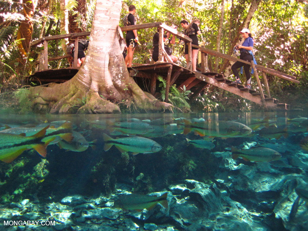 The natural aquarium in Bonito, Brazil.