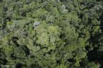 Sabah rainforest, Malaysia (Nov 2012). Photo by Rhett A. Butler