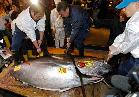 The $1.76M tuna