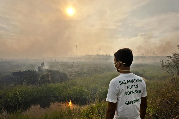 Greenpeace activist bears witness to forest destruction in Riau Province, Indonesia. © Ulet Ifansasti / Greenpeace.