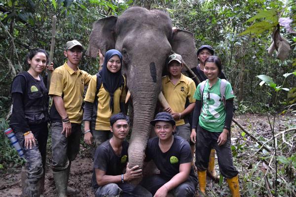 Five elephants collared in Bornean wildlife sanctuary