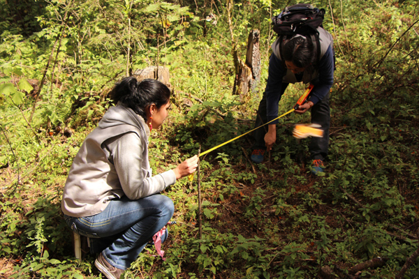 A monarch survey in action.  Photo courtesy of WWF.