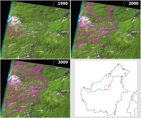Time series showing roads and degraded forest metastasizing across an area in Sarawak.