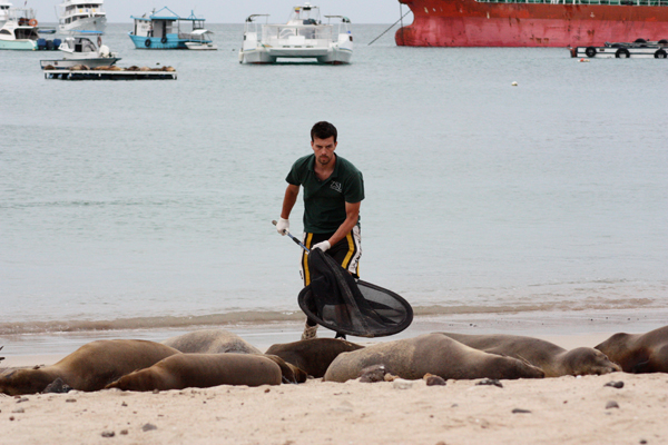 Zoological Society of London's Paddy Brock is shown with Galapagos sea lions.  Photo credit: ©ZSL_JanaJeglinski.