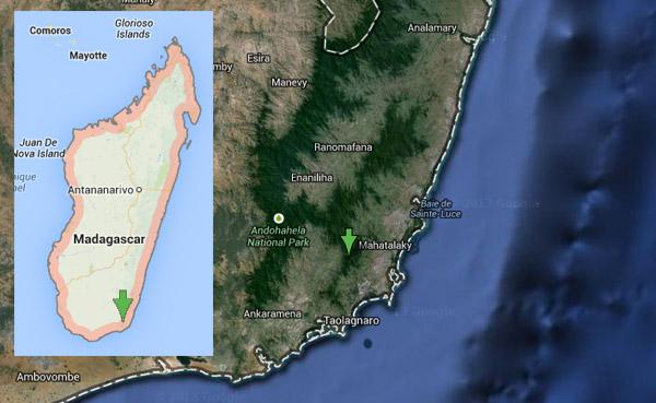 map of Cheirogaleus lavasoensis lemur's range
