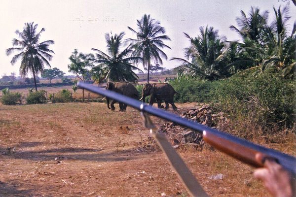 Taken back in 1998, this photo shows villagers holding a shot gun during an elephant crop raid.  Photo courtesy of Shankara / CWS.