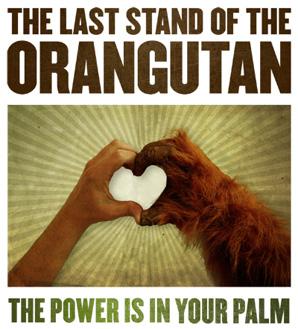 Last stand for orangutans