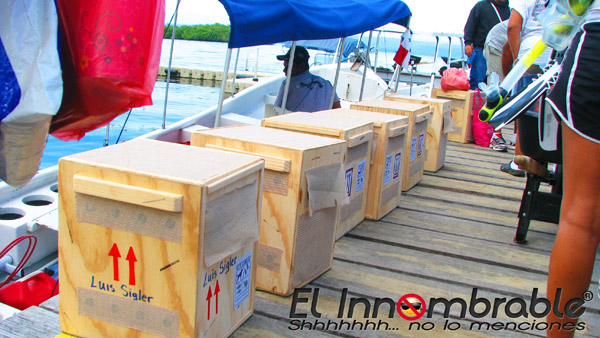 Crates with pygmy sloths destined for Dallas World Aquarium. (Photo courtesy of Jahir Amir Torres via The Bocas Breeze).