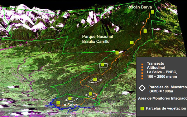 Map showing the team's study plots (green squares) stretching from the lowlands up the mountain to a height of 2800 metres. Image credit Johanna Hurtado.