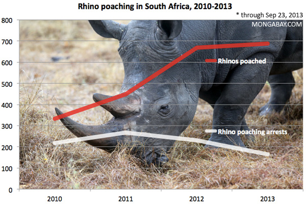 Chart showing rhino poaching and rhino poaching-related arrests in South Africa for 2010, 2011, 2012, 2013