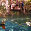 Fish in Bonito's Rio da Prata