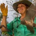 Scientist Jennifer Guyton releasing bats caught during the survey after having taken their body measurements. Photo © 2013 Piotr Naskrecki