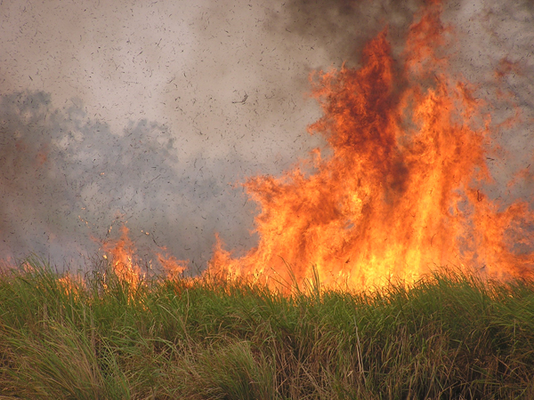 A fire at Kaziranga. The Park practices controlled burning to prevent trees from gradually taking over grassland. The flames can reach up to 40 feet in height and according to Chelliah,
