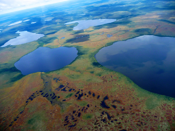 Aerial view of lakes in the Hudson Bay Lowlands. Photo by: Kathleen Rühland.