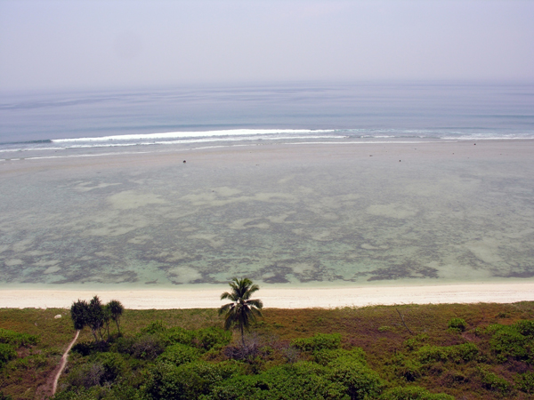An aerial view of a seagrass meadow