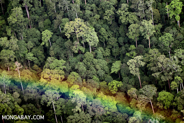Rainforest in Sabah. Photo by: Rhett A. Butler.