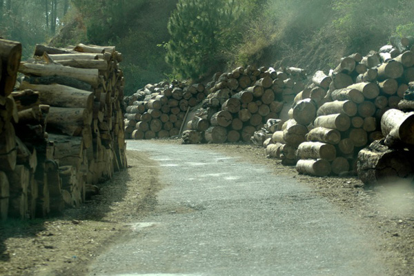 Logs in Africa. Courtesy of Interpol