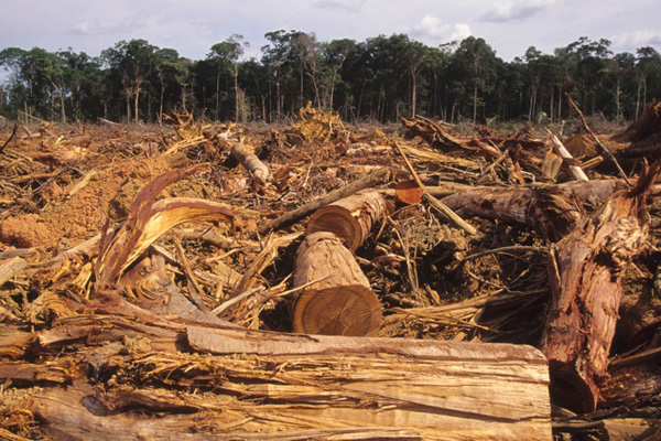 Timber in Africa. Courtesy of Interpol
