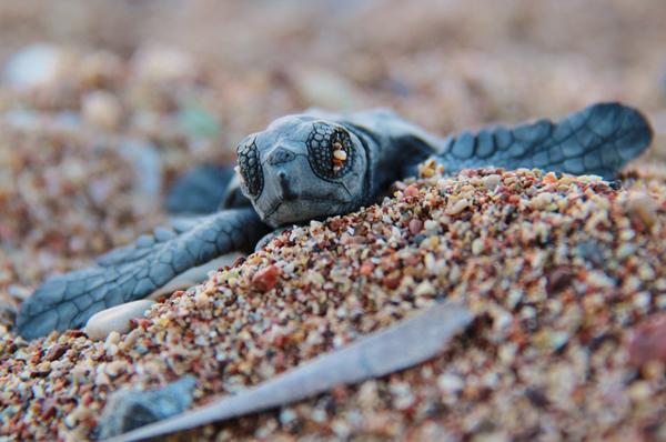 Expository essay on turtles