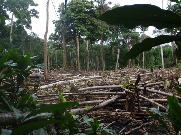 Deforestation in the Congo basin. Photo by Terre Sauvage.