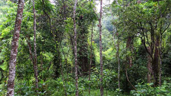 essay on the need to preserve forest