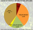 Causes of tropical deforestation