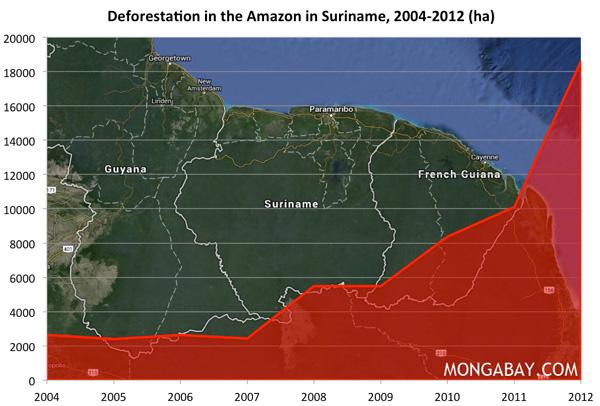 CHART: Deforestation in the Amazon rainforest in Suriname