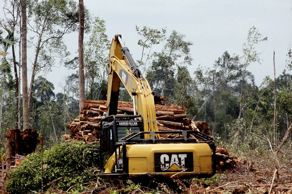 Logging operations at PT Triomas FDI's concession in Riau