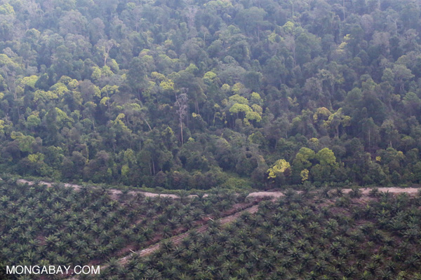 Oil palm and cleared forest in Riau