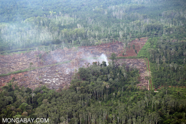 Palm oil DEFORESTATION in Riau, Sumatra.