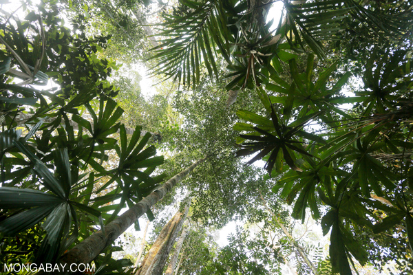 Is 'human rights' the right approach for protecting the interests of forest-dependent people?