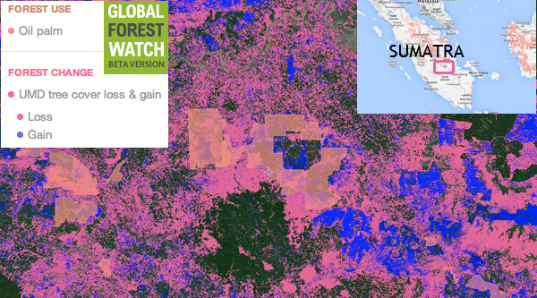 Global Forest Watch map of the area where the incident occurred. Click image for an interactive map..