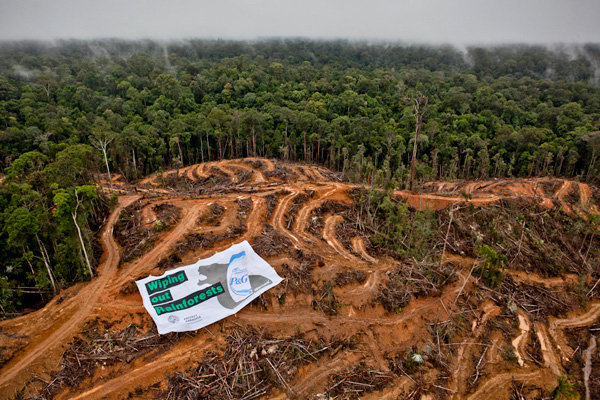 Greenpeace activists unfurl a giant banner in the middle of orangutan habitat inside the concession owned by PT Multi Persada Gatramegah (PT MPG), a subsidiary of Musim Mas company, a palm oil supplier to Procter and Gamble in Muara Teweh, North Barito, Central Kalimantan. Greenpeace is calling P&G to stop destroying Indonesian rainforest and commit zero deforestation policy.