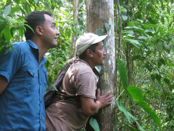 "Benigno Hernandez and Odair Canales from Hondupalma cooperative looking out for a troop of monkeys in a former palm oil plantation,  now set aside to regrow as a secondary forest. ""This forest keeps our stream running, "" says Canales when asked why they stopped growing palms there. Photo by Tanya Dimitrova."