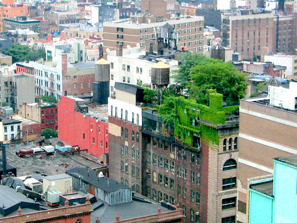 Green spaces can be created around buildings - or even on top of them, as is the case for this Manhattan apartment building. Photo by Alyson Hurt.
