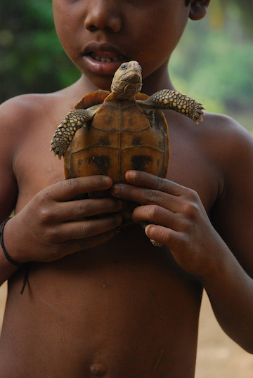 A child holding a Travancore tortoise (Indotestudo travancorica) in an indigenous settlement.  Photo by A. Kanagavel.