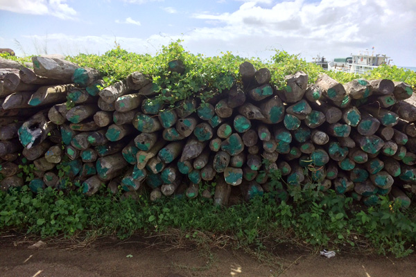 Rosewood stockpile in Antalaha port Madagascar in mid-May 2014