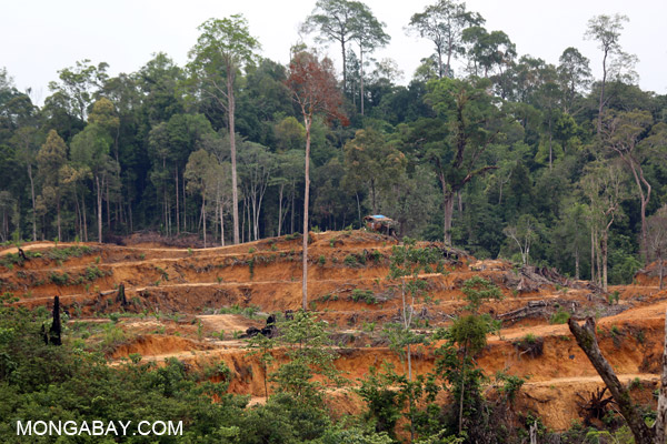 Deforestation for palm in Sumatra, May 2014