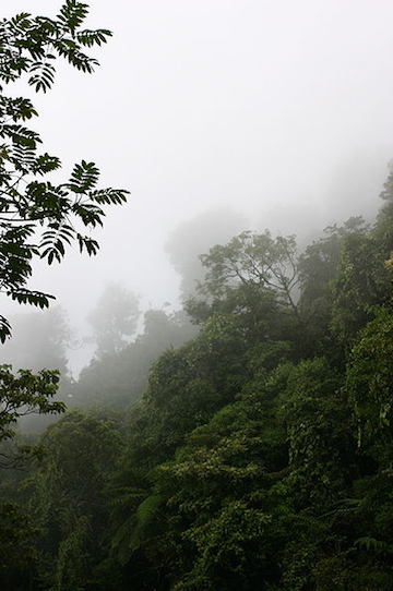 Cloud forests are characterized by persistent low-lying cloud cover. Photo by Prsjl.