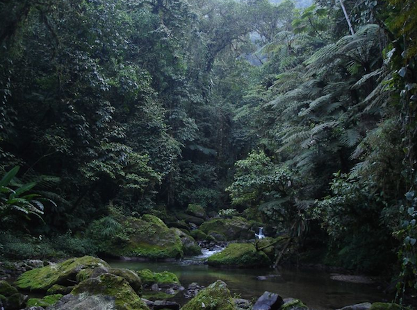 Study finds tiny cloud forests have big biodiversity