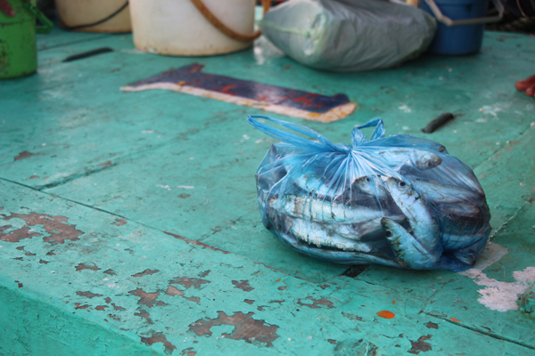 At the end of every fishing trip, each crewman gets a plastic bag worth of fish to take home. On poor fishing nights, boats may not have enough fish to sell to a cannery but every crewman will have fish to take home.