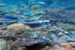 Reefs reduce 97 percent of wave energy, could be better than artificial barriers