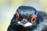 Deforestation taking toll on nesting birds in Cameroon