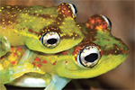 Pictures: the top new animal discoveries of 2014