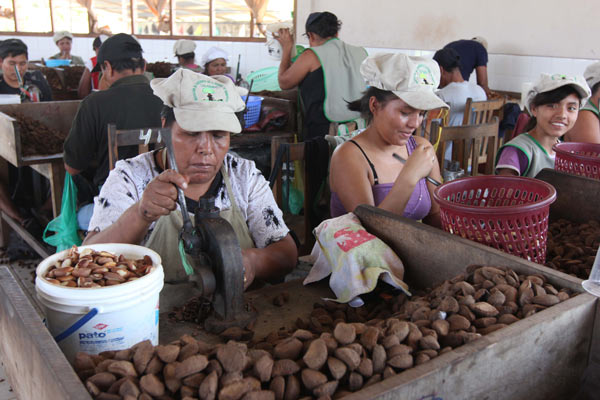 Workers shell Brazil nuts at the ASCART plant in Puerto Maldonado, Peru. Photo by Barbara Fraser.